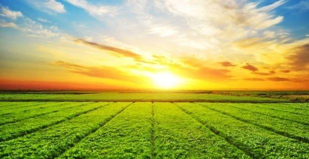 Agriculture industrielle et pesticides : un duo loin d'être idéal pour la planète